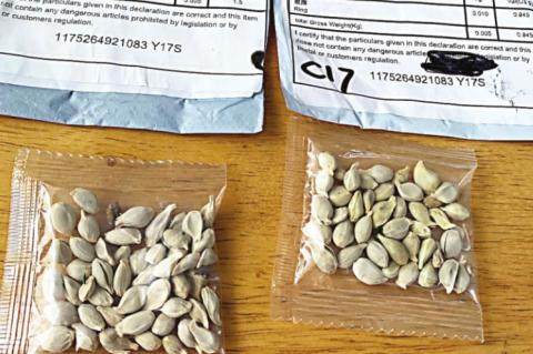 Mystery seed packets spark TDA concern