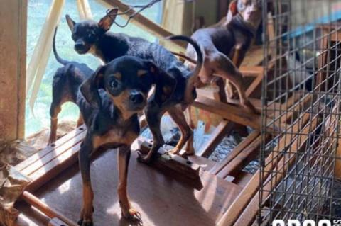 SPCA removes 12 dogs from cruelty case