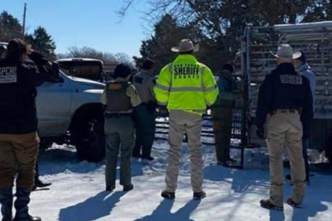 Cows seized from Myrtle Springs property